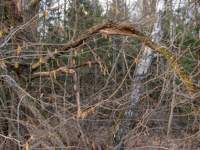 Ветви и стволы