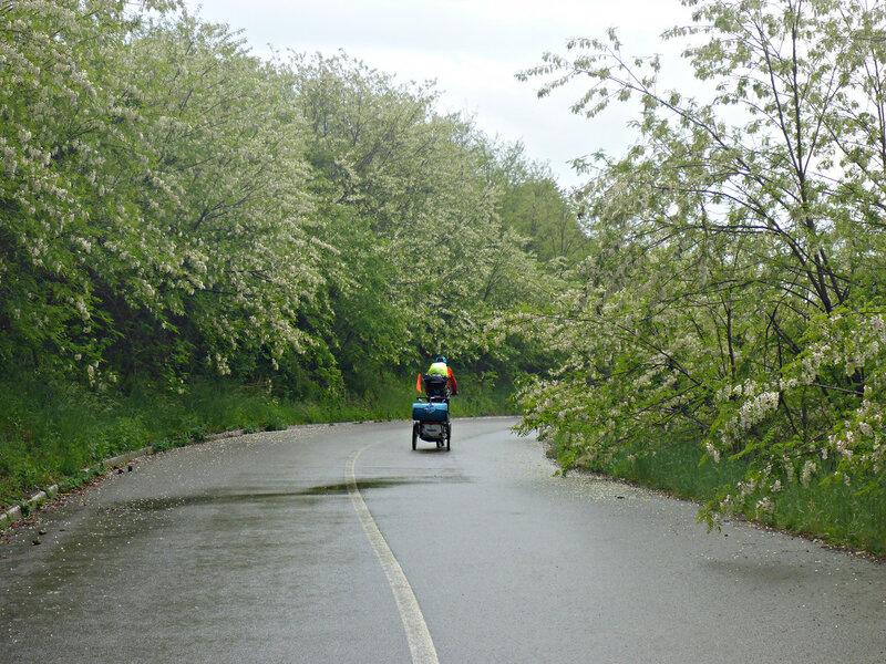 велопоход, дорога и цветущая рябина в мае