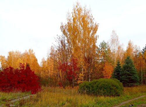 Яркие краски осени..