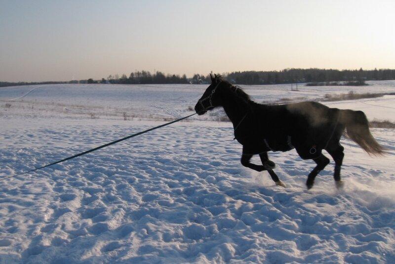 Дымящийся конь