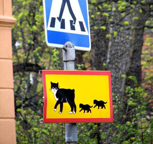 mamacat crossing, upsala, sweden