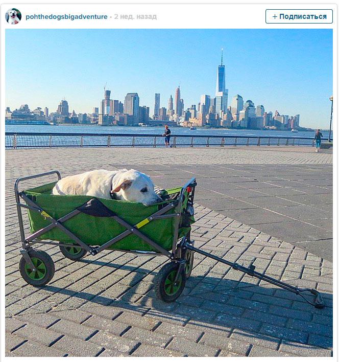собака путешествует по Америке