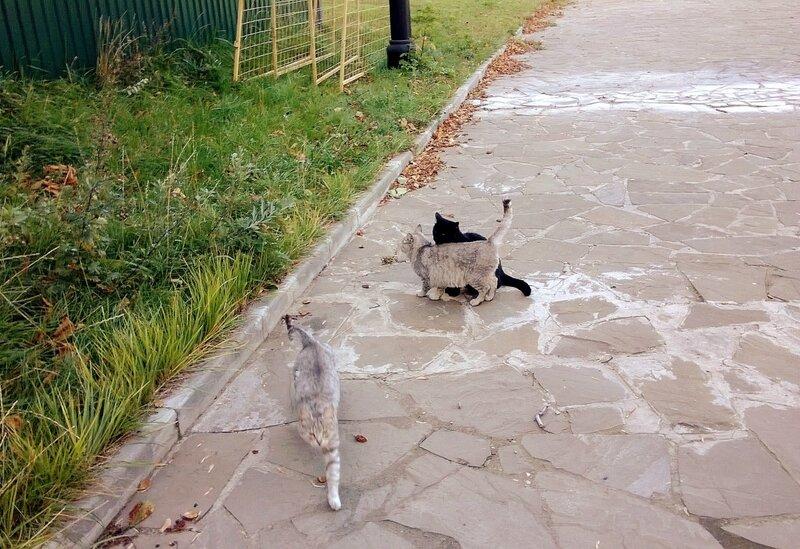 Рогожские котики