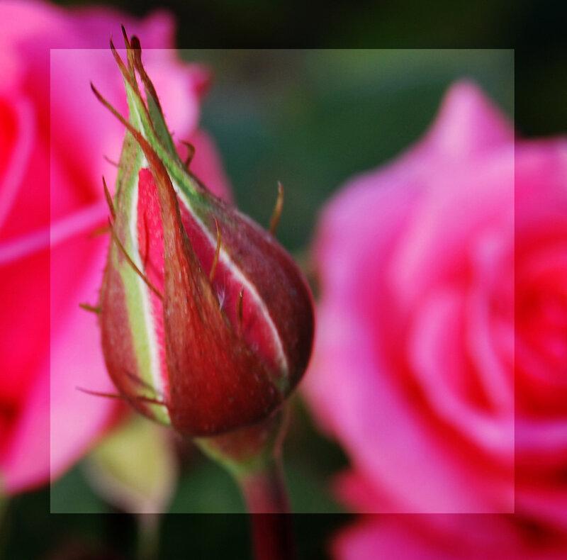 http://img-fotki.yandex.ru/get/3313/lakisaik.0/0_2428e_71df65d7_XL
