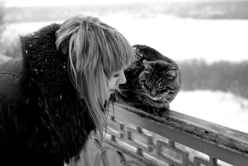 кот и KOSHKA