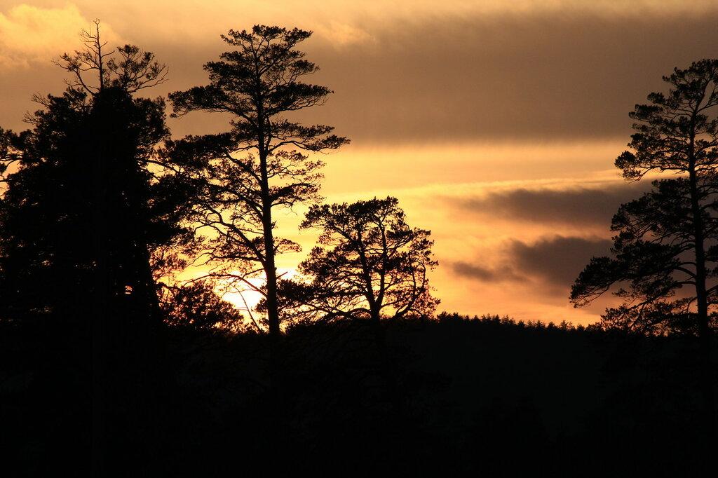 закат за сосной