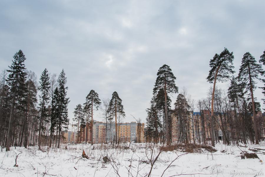 нетронутые деревья