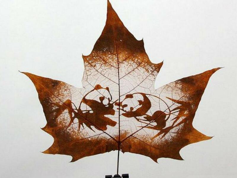 имеются рисунки на листьях клена картинки если зарплата была