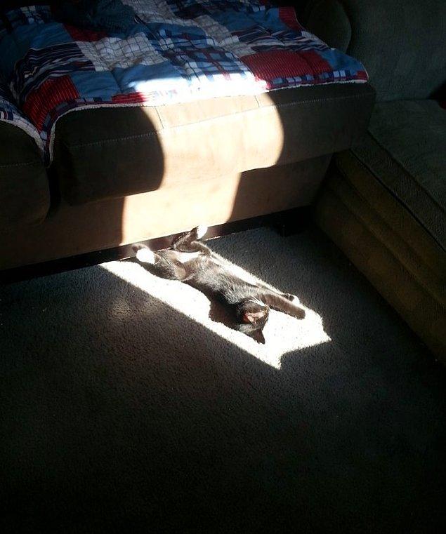 Нашел теплое местечко под солнцем.