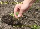 Книга Борьба с сорняками без лопаты и химии