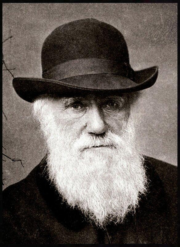 Чарльз Роберт Дарвин в 1881, фрагмент портрета.Charles_Darwin_1880 .jpg