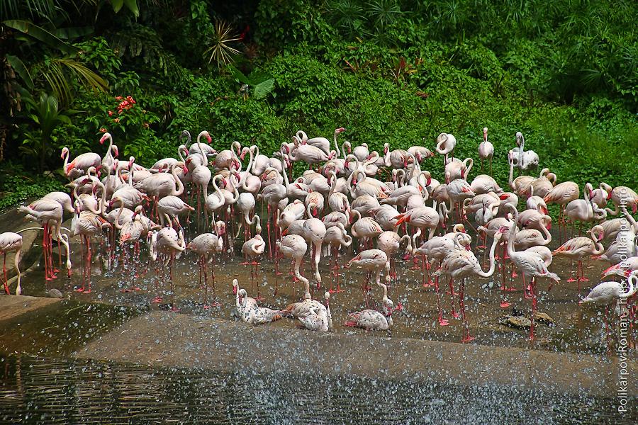 0 c4fab 5a15f4a7 orig Парк птиц Jurong в Сингапуре