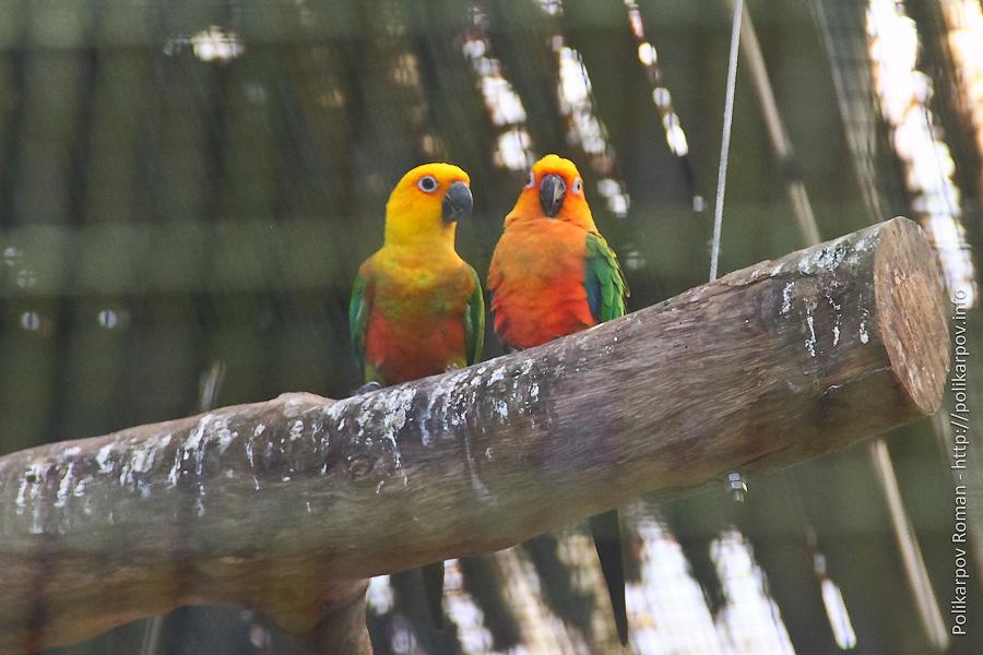 0 c4fb2 d61e1ae7 orig Парк птиц Jurong в Сингапуре