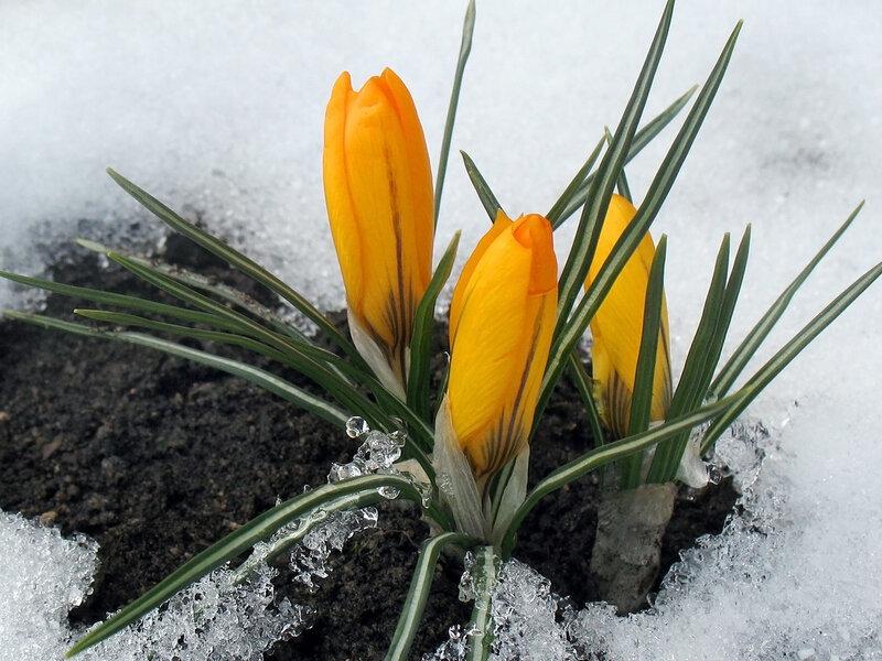 Первоцветье ранняя весна в лесу