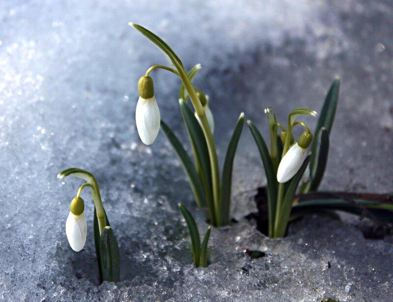 Еще раз про весну)