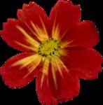 jsn_studioNDC_round2_am_flower3.png