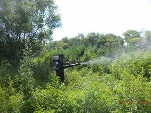 В Приморье наркополицейские уничтожили 51 гектар дикорастущей конопли