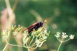 Неизвестное насекомое - 2