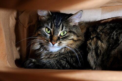 Кошка в упаковке