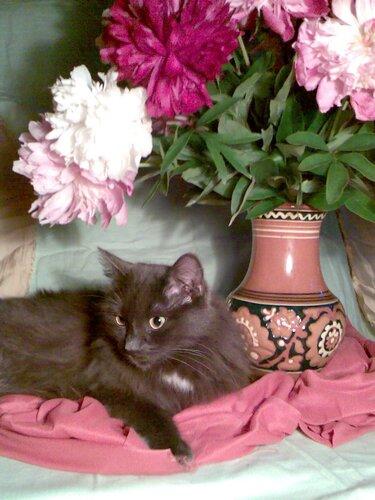 Кот и букет пионов