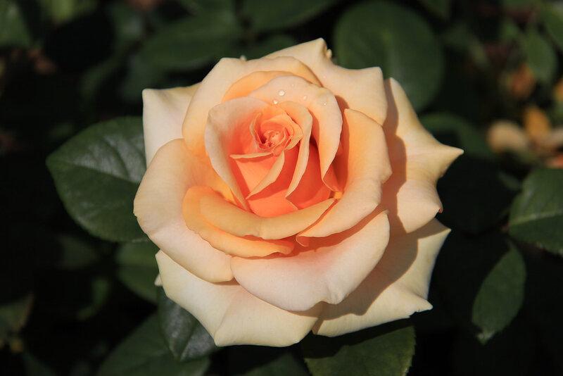 Смотреть онлайн rose monroe 15 фотография