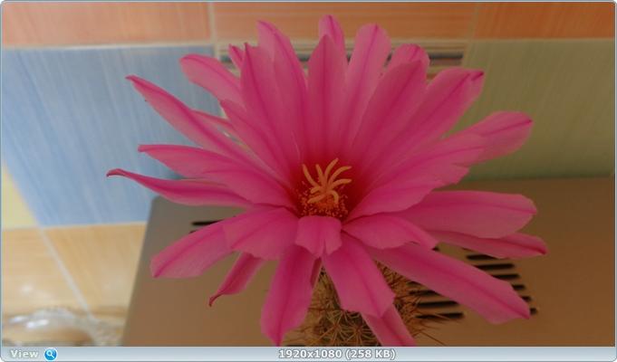 http://img-fotki.yandex.ru/get/3406/161956531.d/0_1487a8_a49eacc4_orig.jpg