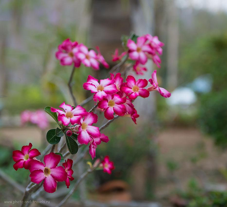 Фото 2. Советую из Паттайи отправиться на экскурсию в национальный парк Эраван, где протекает знаменитая река Квай. Кто не фотографировал цветы в отпуске? (500, 70, 2.8, 1/80)