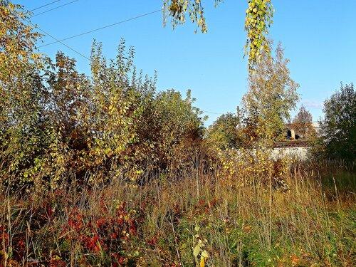 Осенние краски..