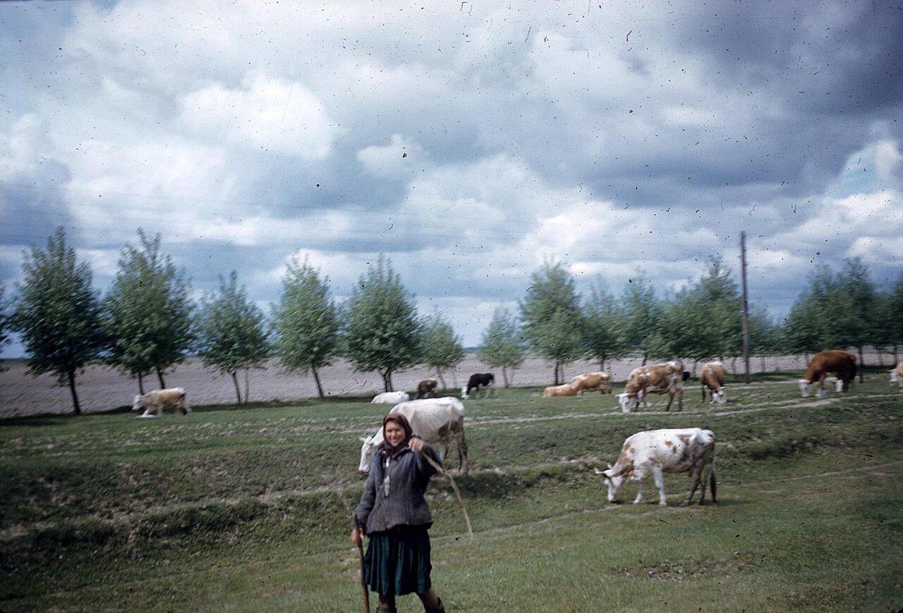 Женщина пасет скот на пастбище