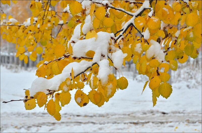 Контрасты ранней зимы...