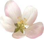 NLD Pink Flower (6).png