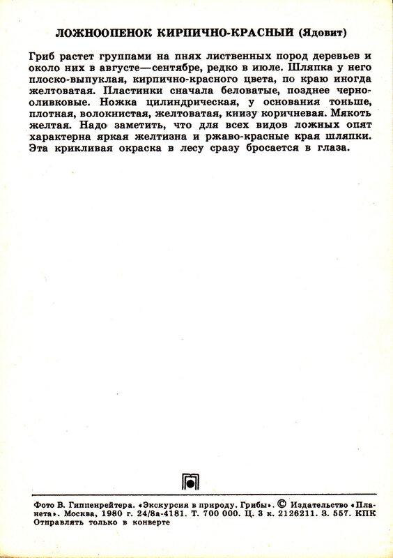 Ложноопенок кирпично-красный (Ядовит)