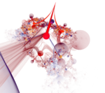 Apophysis-080719-1.png