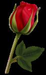 цветы-(139).png