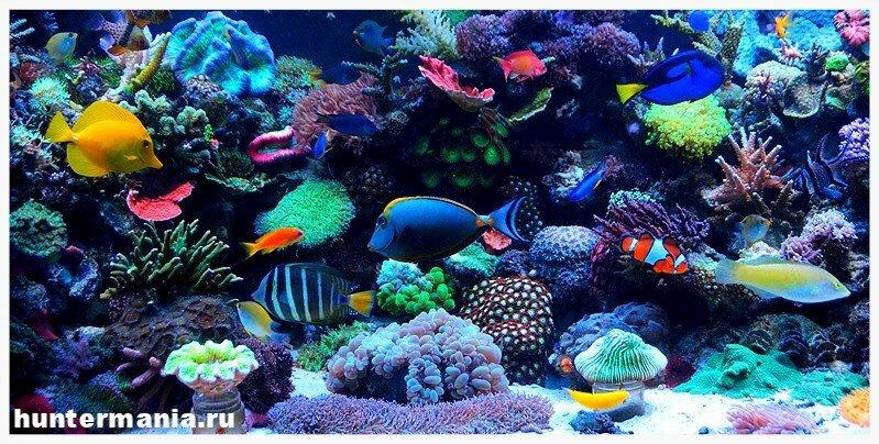 Обитатели морских глубин у Вас дома. Тонкости содержания морского аквариума