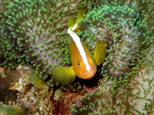 Подводный мир острова Менджанган: фотографии удивительных морских существ