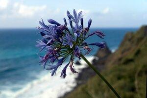 11_Madeira_049.jpg