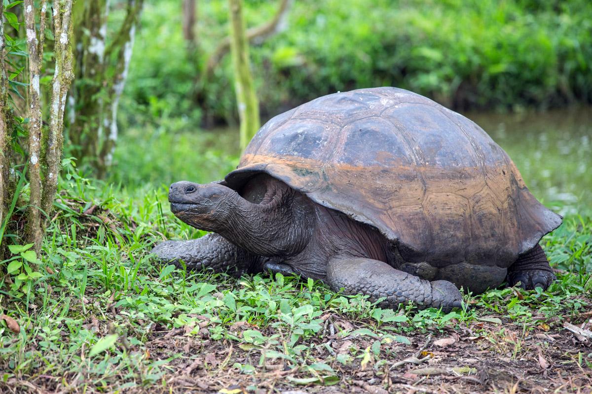 Яиц, картинки слоновой черепахи