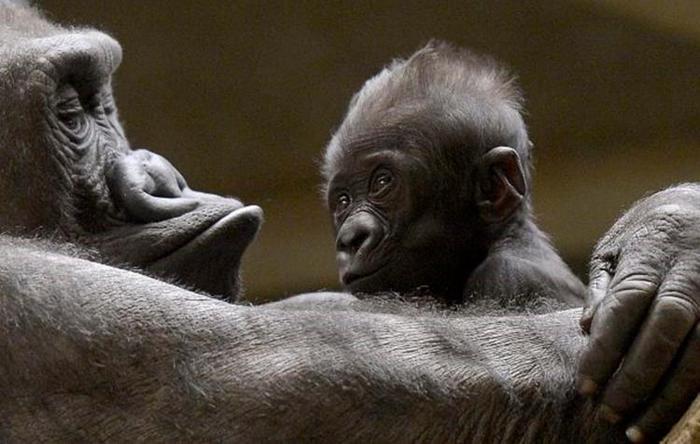 Маленькие детеныши животных в зоопарке