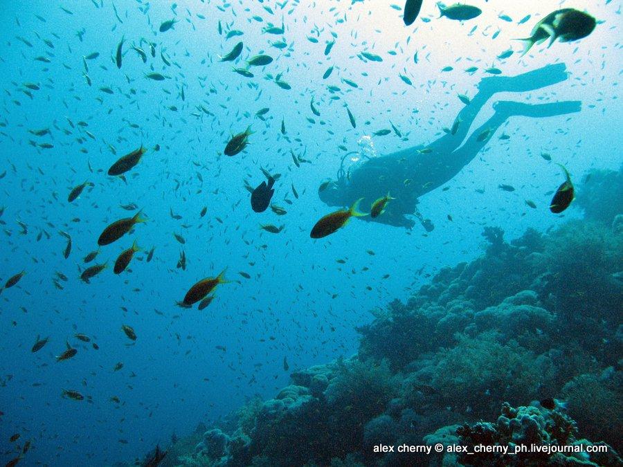 diving 058.jpg