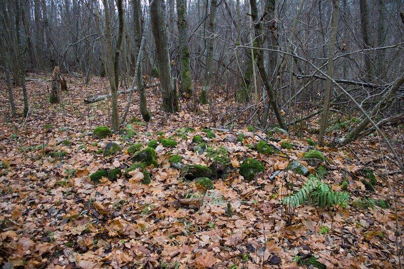 россыпь камней в лесу, Псковская область