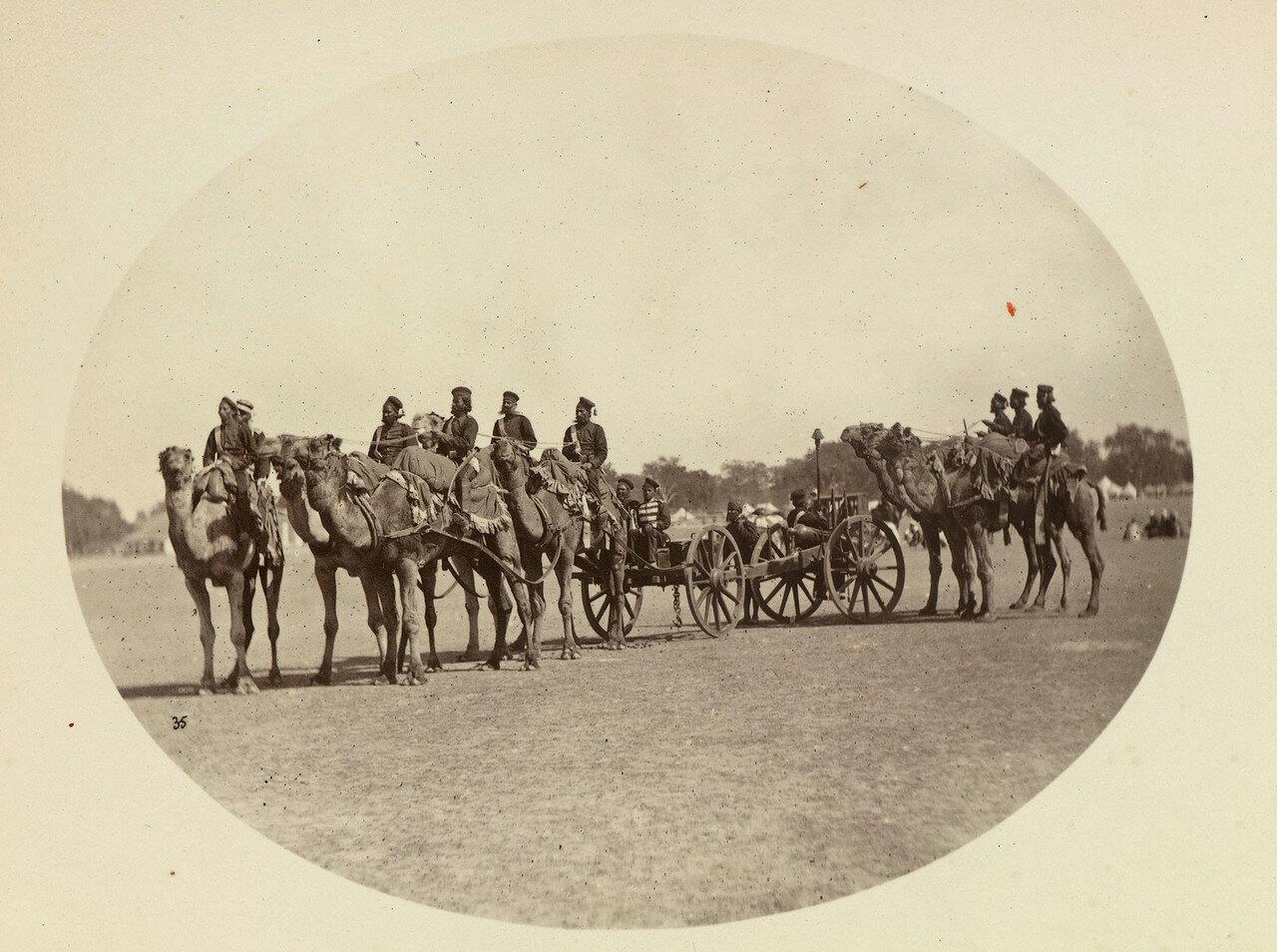 75. Верблюжья артиллерия махараджи Алвара