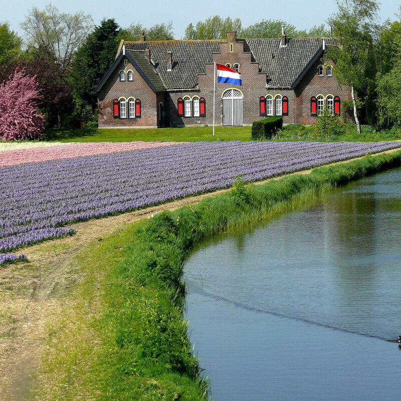 """дорога в голландский город Лиссе, возле которого находится замечательный """"Койкенхоф"""""""