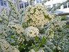 Бесплатные фотографии для частного и некомерческого использования. При использовании в веб - проектах ссылка на автора обязательна. © www.solncewo.ru