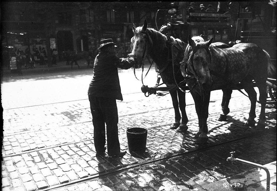 14 Lorsque la chaleur s'installe, on rafraichit les chevaux, comme ici à l'été 1911.jpg