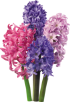 flower (13).png