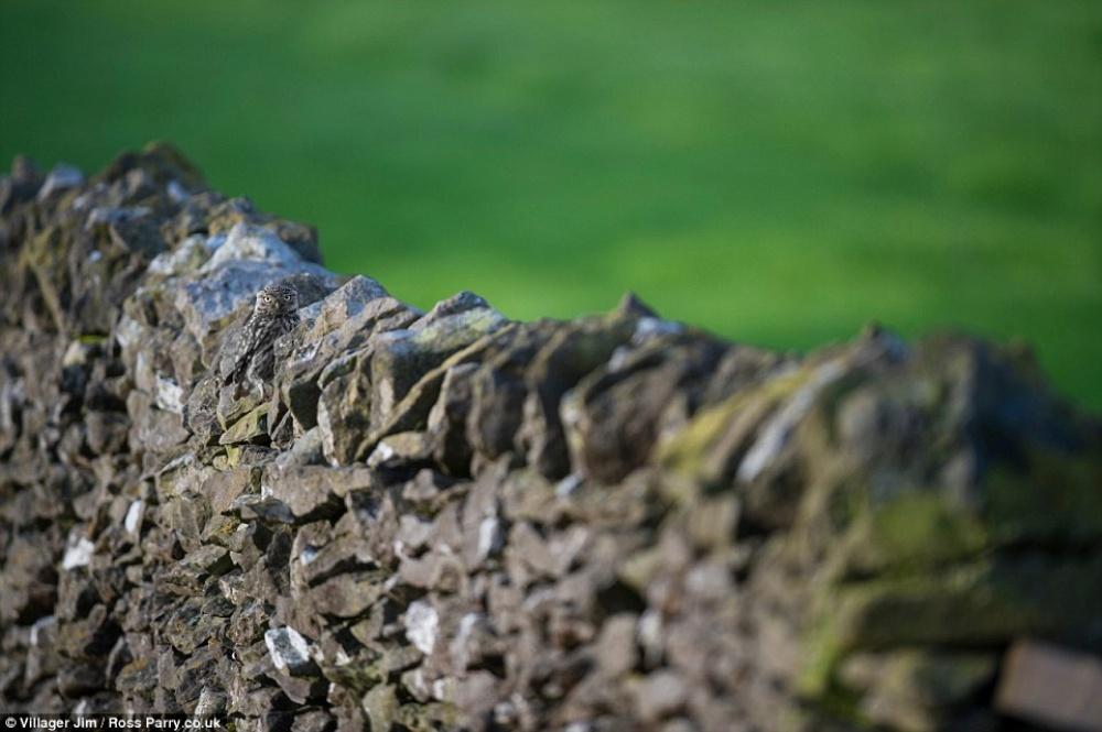 Найди сову (16 фото)