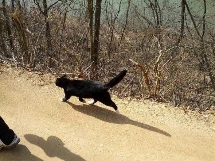 Кот-скалолаз, показал тропу