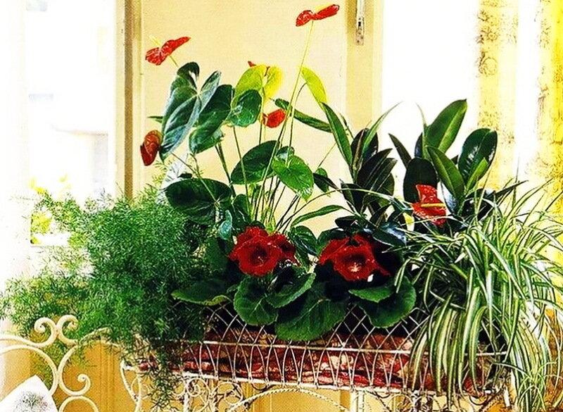 Комнатные цветы композиции