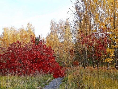 Разгулялась осень в парке, все раскрасила кругом..